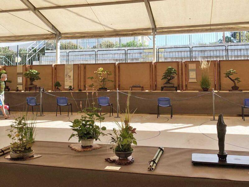 Festival del Bonsai. Andora 2020