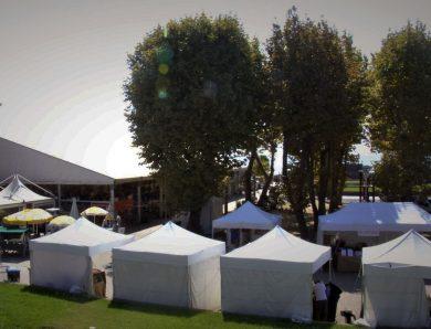 Festival del Bonsai, Suiseki e Kusamono. Andora (SV), 2021